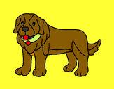 Desenho Cão pigmento pintado por MJJR