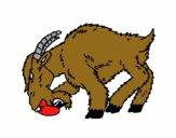 Cabra aborrecida