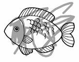 Peixe para comer