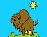 Bisonte no deserto