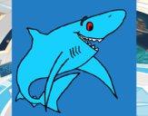 Tiburão alegre