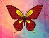 Desenho Borboleta tropical pintado por CBarbizan