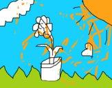 Flor nas nuvens