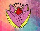 Desenho Flor de túlipa pintado por jmario