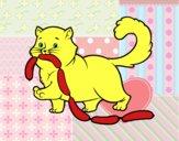 Gato com salsicha