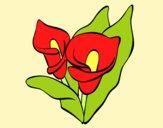 Desenho Lilium pintado por carmasiana