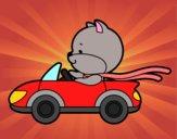 Gato dirigindo