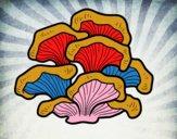 Cogumelo pleurotus