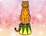 Tigre do circo