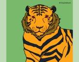 Desenho Tigre pintado por ceciliaz