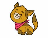Gato com bandana