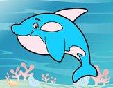 Orca jovem