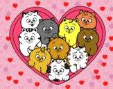 Coração de gatinhos