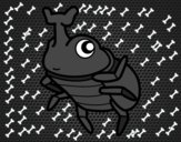 Besouros-rinoceronte