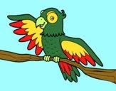 Papagaio en liberdade