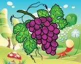 Desenho Cacho de uvas pintado por ceciliaz