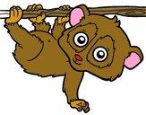 Pigmeu loris lento