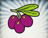Ramo azeitonas