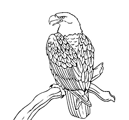 Image Result For Kakapo Coloring Templates