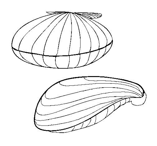 Desenho de Amêijoas para Colorir