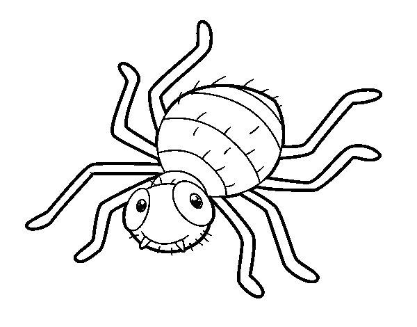 Desenho De Aranha Infantil Para Colorir