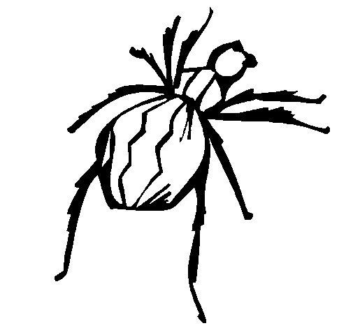 Desenho de Aranha viúva negra para Colorir