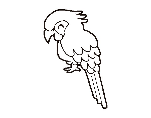 Download image desenho de araras para colorir pc android iphone and
