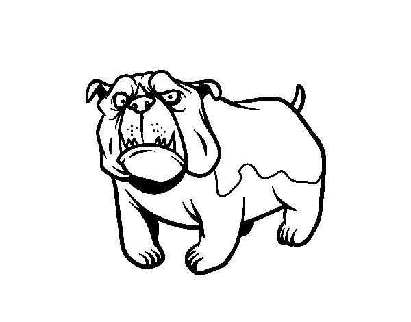 Desenho de Cão buldogue inglês para Colorir