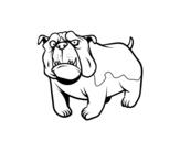 Desenho de Cão buldogue inglês para colorear
