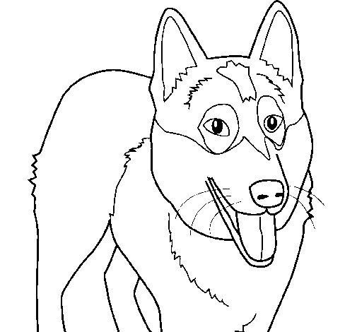 Desenho de Cão Pastor Alemão para Colorir