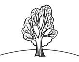 Desenho de Castanea para colorear