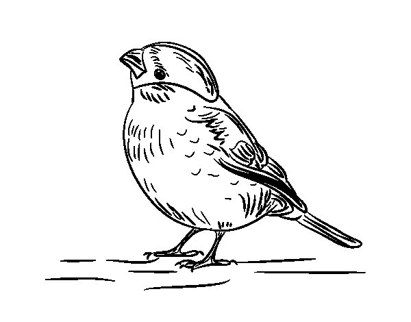 Desenho de Chamariz para Colorir