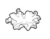 Desenho de Cogumelo orelha de madeira para colorear