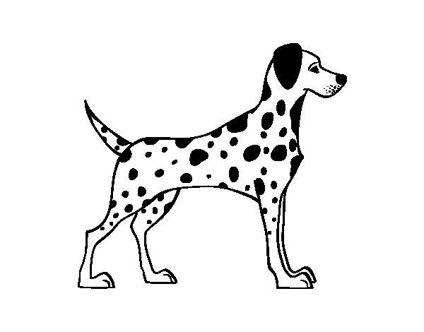 Desenho de Dálmata masculino para Colorir