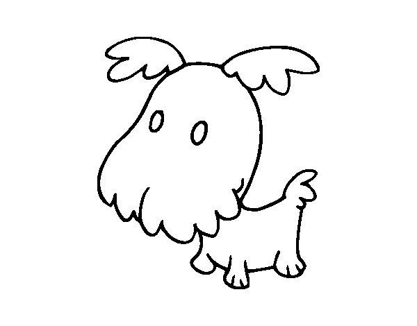 Desenho de Filhote Griffon para Colorir