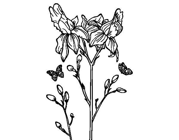 Holiday Coloring Pages Cactus Desenho De Flor Iris Para Colorir