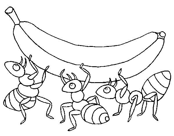 Desenho De Formigas Com Banana Para Colorir