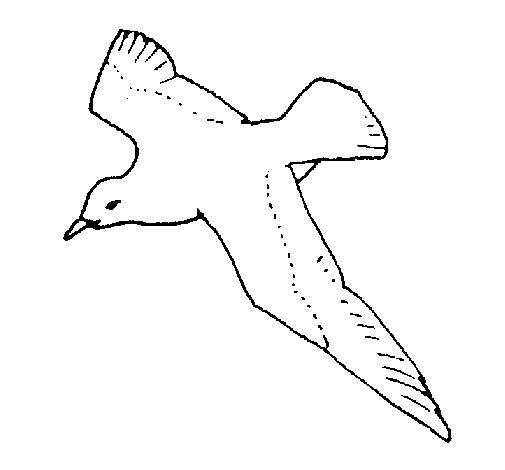 Desenho de Gaviota para Colorir