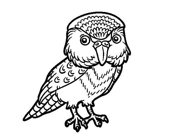 Desenho de Kakapo para Colorir