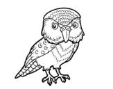 Desenho de Kakapo para colorear