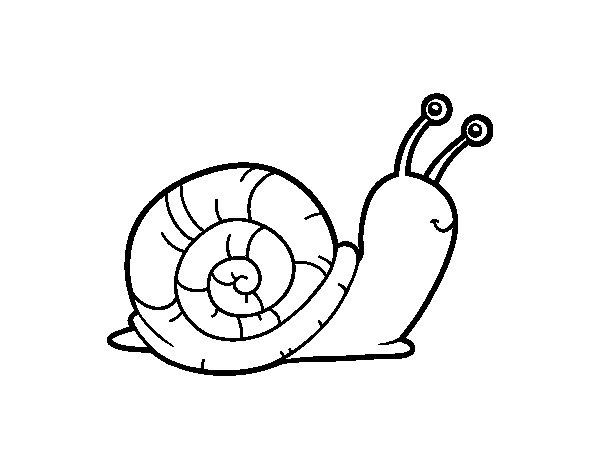Desenho de O caracol para Colorir