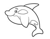 Desenho de Orca jovem para colorear