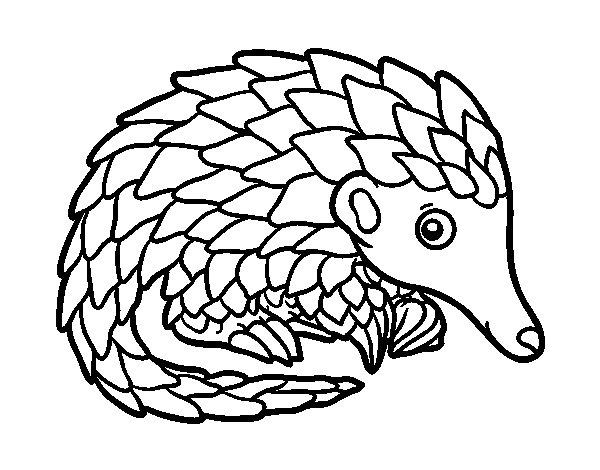 Desenho de Pangolim para Colorir