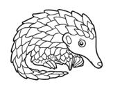 Desenho de Pangolim para colorear