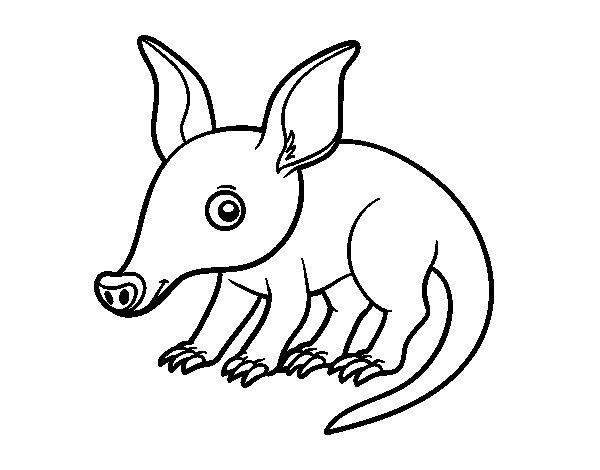 Desenho de Porco-formigueiro para Colorir
