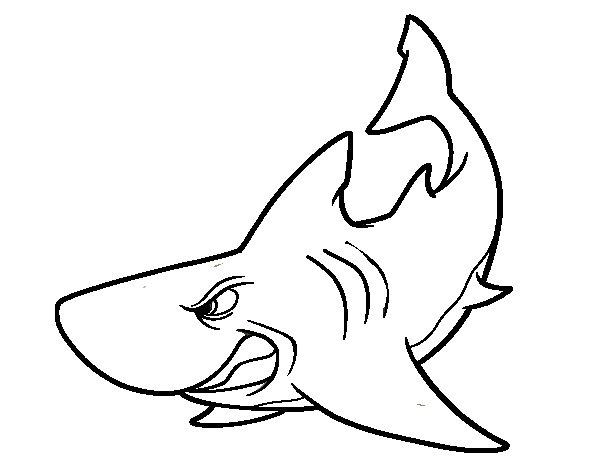 Desenho de Tubarão furioso para Colorir