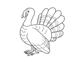Desenho de Turquia comum para colorear