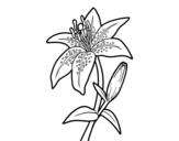 Desenho de Um lírio para colorear