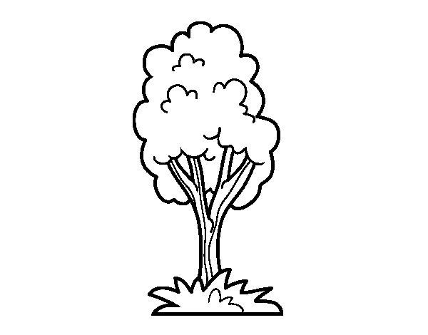 Desenho De Uma árvore De Parque Para Colorir