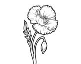 Desenho de Uma flor de papoula para colorear